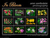 "In Bloom - new calendar! : The new flower calendar for the coming year  just got it up and running today, Sept 20   The individual photos as prints, in a variety of finishes and sizes, can be ordered right here on smugmug - clicking on buy will give you info on prices and sizes (click on ""product""). I f you want the calendar, I've got it on lulu and cafepress, but lulu did a slightly better job of it. Here is the link to it there.  http://www.lulu.com/product/calendar/in-bloom-calendar/13648674."